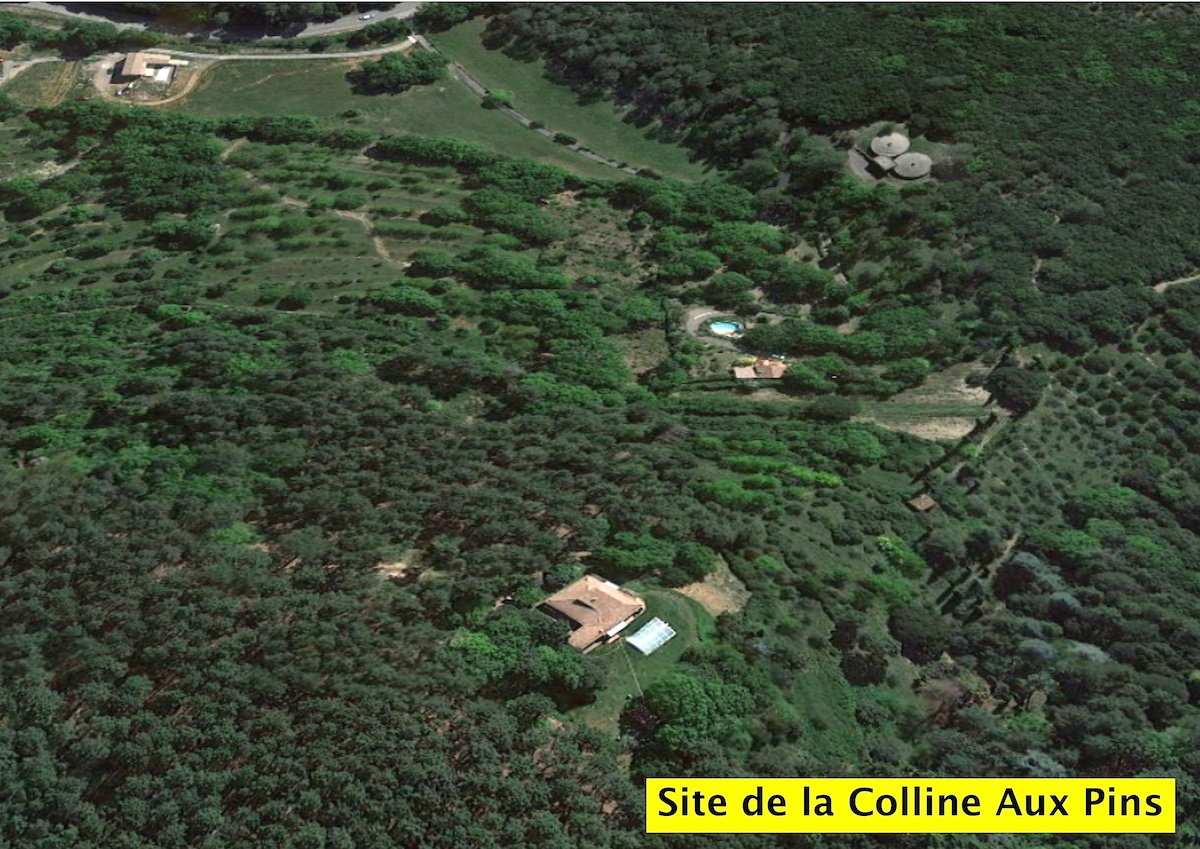 site elevage de la colline aux pins d'or mastiffs